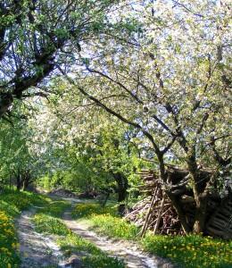 Słomczyn-skarpa FOT A. ZYSZCZYK wiosna2